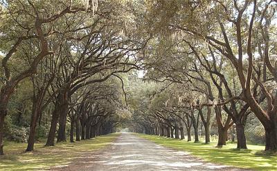 Savannah Drive