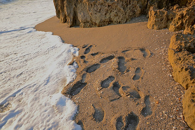 Footprints last and lost