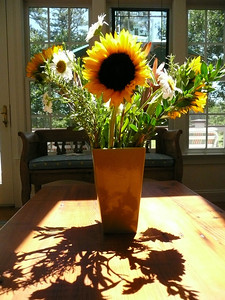 Sunflower Shadow