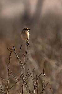 The Early Bird2