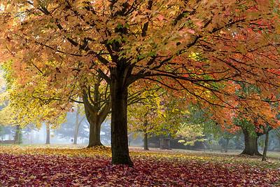 The Arboretum 2 ~ West Lodge Park Hotel