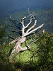 Dead Tree Bleaching, by: Jim Lawrence, Pictorial, score: