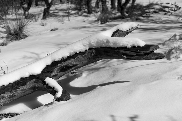 Snow on a Log