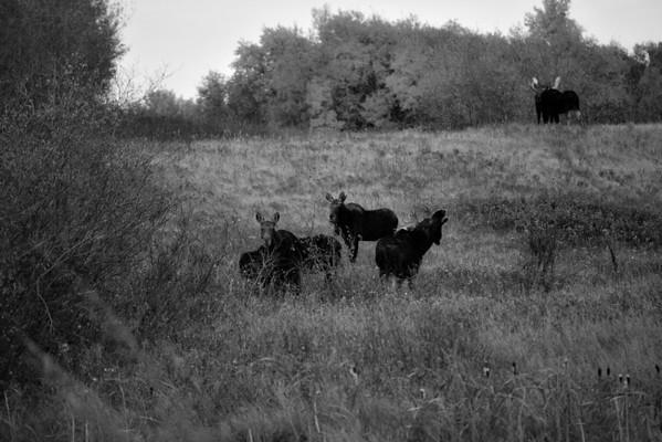 BW-Call of the Wild-Karen Pidskalny