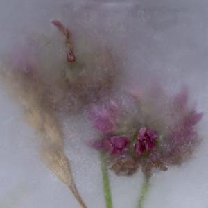 Frozen Clover Flower - Kath
