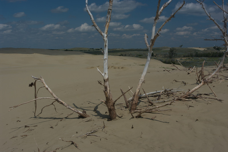 The Great Sandhills,