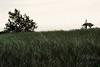 alita maini - wind kissed lake shore grass  - http://