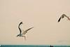 alita maini - flight of the seagulls  - http://