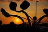 alita maini - Carnival octopus at twilight  - http://