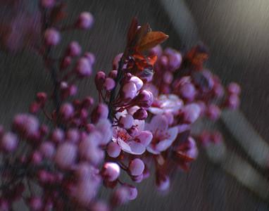 Color In The Rain