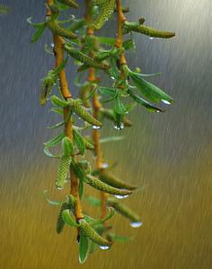 Shower Flower Drip