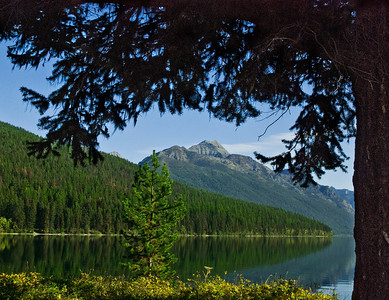 View Of Bowman Lake Surroundings