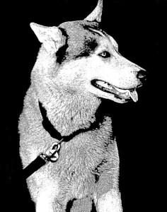 Durango Dog