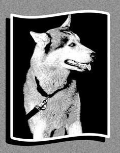 Durango Dog Notecard