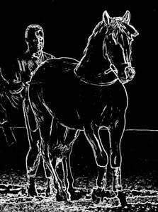 Lipica Stallion Trainer
