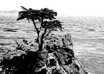 The Lone Tree At Pebble Beach