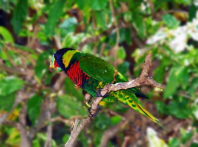 Dimensional Bird