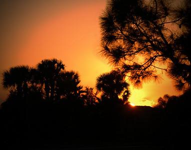 Ibis Sunset