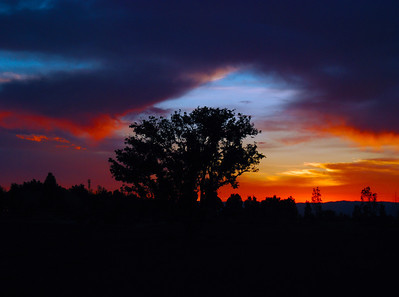 Sunset By The Lone Tree
