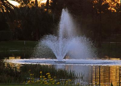 Ibis Fountain