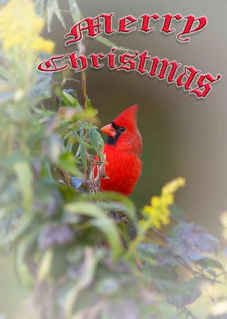 Merry Christmas