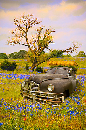 Packard and Bluebonnets