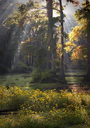 Early morning rays<br /> Clear Lake Louisiana