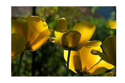 Springtime by Jane L
