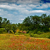 A field of red and yellow glory in the Texas Hill Country.