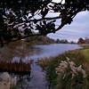 Chaplins lake at Northwestern State University in Natchitoches, LA.