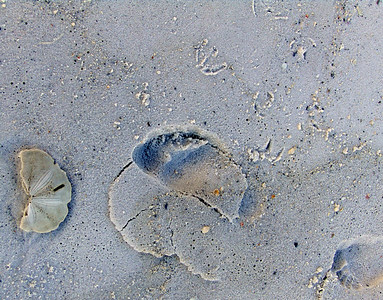 Nature's floor