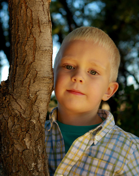 PO-Tree Hugger-Stephen Nicholson