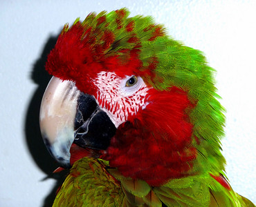 Hello Polly
