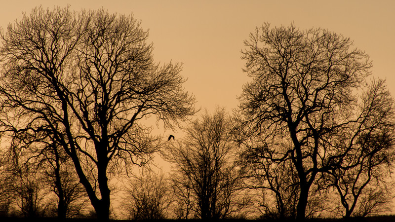 Late Evening Silhouette
