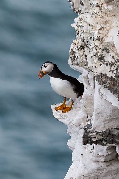 Puffin Lookout