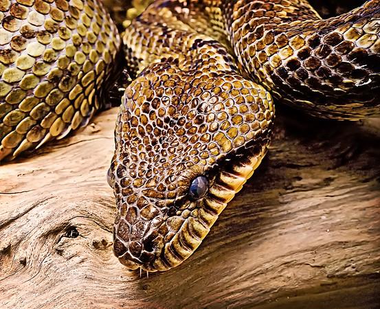 SteveH Snake eye