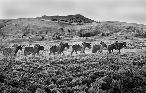 Packtrain in Yellowstone<br /> Black and White