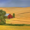 Palouse Barn<br /> by Wayne Tabor<br /> Pictoral<br /> Best Color Print 2011
