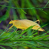 Yellow Leafhopper<br /> by Wayne Tabor<br /> Macro<br /> Score 12