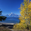 Colter Bay in Autumn