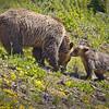 Bear Whisperer<br /> by Wayne Tabor<br /> Wildlife Score 12