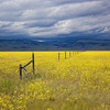 Storm Over Golden Field<br /> by Wayne Tabor<br /> Landscape<br /> Score 13