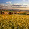 Palouse Fields<br /> by Wayne Tabor<br /> Landscape<br /> Score 14