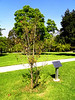 Armenian Martyrs Memorial, Montebello - 6<br /> The President of Armenia planted this tree in 2011