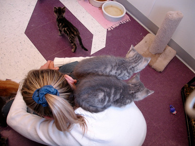 Loving on the Kitties at the Iosco County Humane Society near East Tawas, MI.