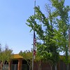 School flag at half-mast