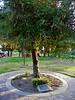 World War II memorial tree