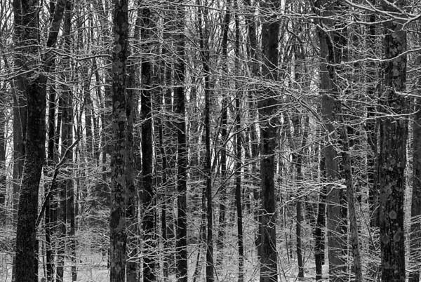 Alabama Snow 2010