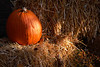 1847 Fall Pumpkin