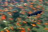 1693 fish